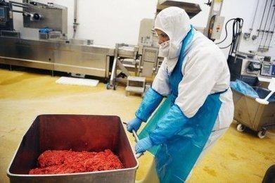 Lasagnes Findus : le soupçon pèse sur la filière, du Pays basque à la Roumanie | Agriculture en Dordogne | Scoop.it