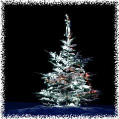 Geocaching : 50 arbres de Noël cachés en forêts - Chasses-au ... | Géocaching et tourisme | Scoop.it