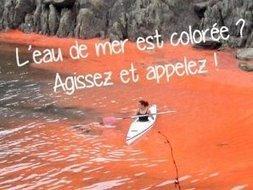 Micro-algues. Bretons, touristes, ouvrez l'œil ! | Toxique, soyons vigilant ! | Scoop.it