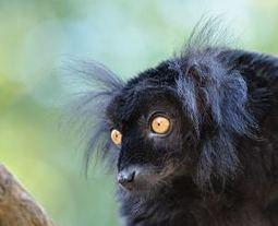 Guía de control para animales geriátricos en núcleos zoológicos | Enriquecimiento ambiental en animales en cautividad y mascotas. | Scoop.it