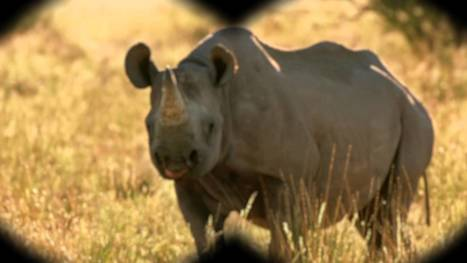 How technology (and people) are helping to sustain the black rhino | What's Happening to Africa's Rhino? | Scoop.it