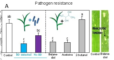Volatiles produced by soil-borne endophytic bacteria increase plant pathogen resistance and affect tritrophic interactions | Plant Microbe Interactions | Scoop.it