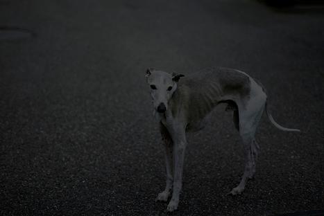 Pourquoi suis-je photographe #3 | Sylvain Couzinet-Jacques | Photography Now | Scoop.it