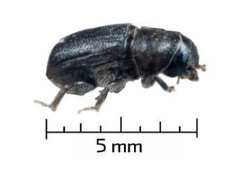 Lutter contre les insectes ravageurs... depuis l'espace | EntomoNews | Scoop.it