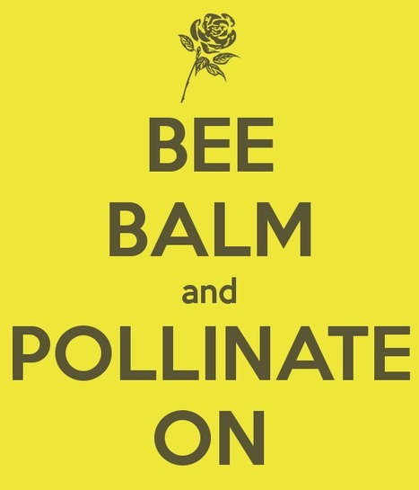 BEE BALM and POLLINATE ON | Pollinators: a plant focus, for backyards | Scoop.it