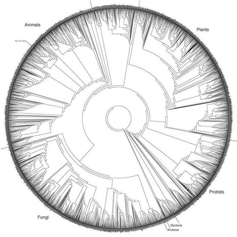 Tree of Life (~3,000 species, based on rRNA sequences) | data duty | Scoop.it