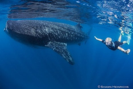 What can we do to protect and restore the ocean?  - Virgin.com | Breakthrough Strategies and Business Systems for Visionary Entrepreneurs | Scoop.it