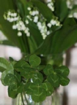 Muguet et trèfles de Lou | The Blog's Revue by OlivierSC | Scoop.it