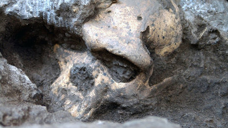 Skull Fossil Suggests Simpler Human Lineage | Sci-fi geek: My alter ego! | Scoop.it