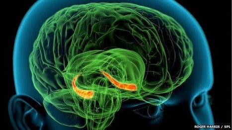 Memories 'need space' in brain   The future of medicine and health   Scoop.it