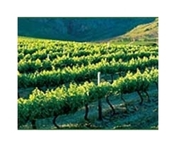 Pandas vs pinot as vineyards adjust to warming | Sustain Our Earth | Scoop.it