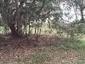 Environment « Ningy Ningy Aboriginal Nation   Sustainability of Loggerhead Turtles in Moreton Bay   Scoop.it