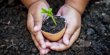 Contre les pesticides, choisissons les bonnes graines   Phytosanitaires et pesticides   Scoop.it
