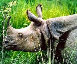 Fears for African rhinos in China forest | Sustain Our Earth | Scoop.it