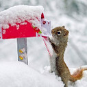 Where is my letter to Santa Claus? I put it here! - via @Serpentina3 | Santa Letters | Scoop.it