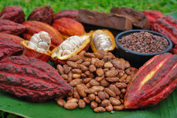 Salute: le proprietà di cacao e cioccolato, estasy di piacere ed elisir ... - Meteo Web   Salute generico   Scoop.it