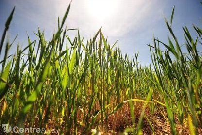 Pesticides dans l'Yonne : près de 1.000 tonnes utilisées chaque année   Comment va ma Planète ?   Scoop.it