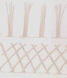 osier vivant | Potager & Jardin | Scoop.it