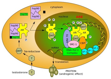 Phospho-kinase profile of triple negative breast cancer and androgen receptor signaling | Breast Cancer News | Scoop.it