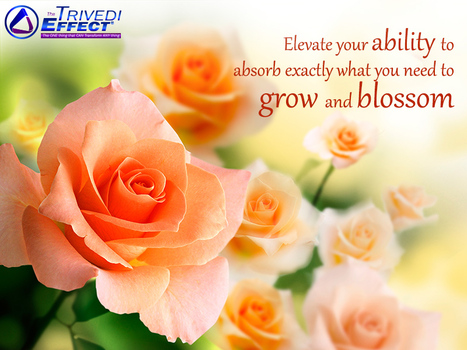 Enhance your ability to flourish, to grow and to blossom | Mahendra Kumar Trivedi | Scoop.it