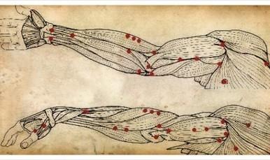 Heal Muscle Fascia With 8 Animals Qigong - Qigong in Bali | Taochiflow | Scoop.it