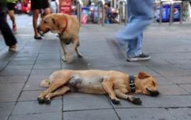 USJ to launch course in animal welfare | Animals R Us | Scoop.it