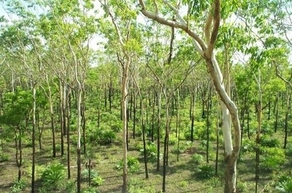 Good luck and the Chinese reverse global forest loss | Sustain Our Earth | Scoop.it