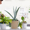 Foliage Indoor Plant Hire