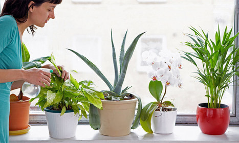 Use Indoor Plants for having Green Decorating | Foliage Indoor Plant Hire | Scoop.it