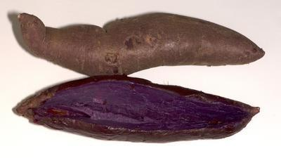 Farmers Markets: Stokes Purple is a sweet potato of mystery | North Carolina Agriculture | Scoop.it