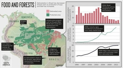 Stopping deforestation: Battle for the Amazon | oceans | Scoop.it