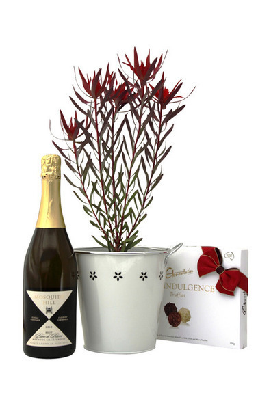 The Red Devil with champas by Green Thumb Gifts | Plants Online | Scoop.it