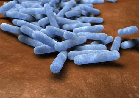 Engineered Probiotics Prevent Obesity in Mice   leapmind   Scoop.it