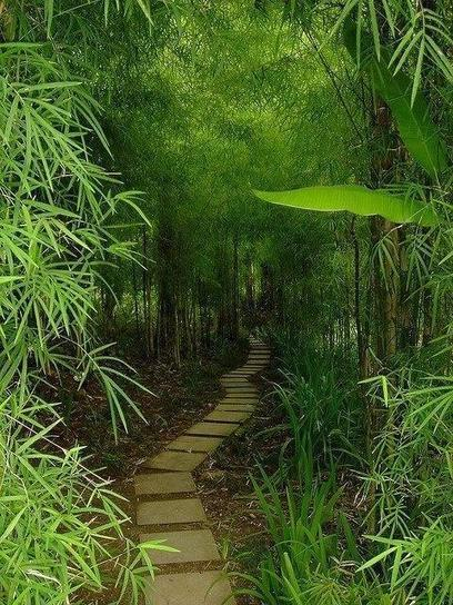 Twitter / GlobePosts: Bamboo trail in Bali, Indonesia ... | New age bamboo solutions | Scoop.it