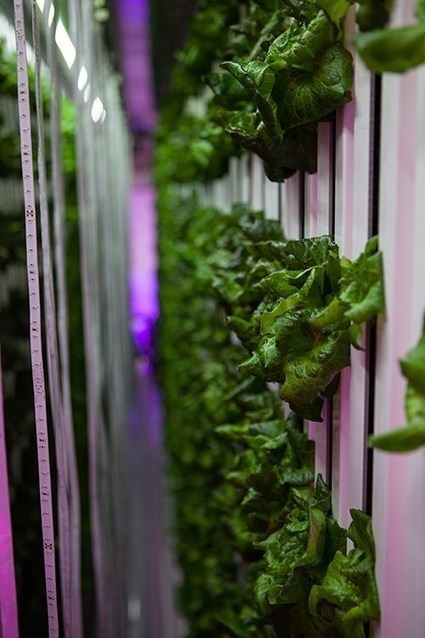 Freight Farm Lettuce Used in Campus Dining Halls on Friday | Vertical Farm - Food Factory | Scoop.it