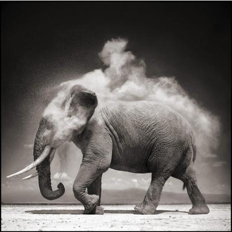 Nick Brandt : Photography | Communication design | Scoop.it