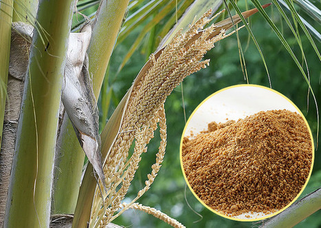 Is Coconut Sugar the Perfect Alternative Sweetener? | Dangers of sugar consumption | Scoop.it