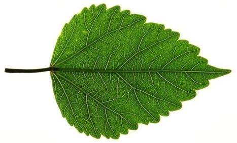 Quanto vale essere Green?   Relactions Journal -   Scoop.it