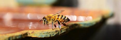 6 gestes simples pour aider les abeilles | Monde Agricole | Scoop.it