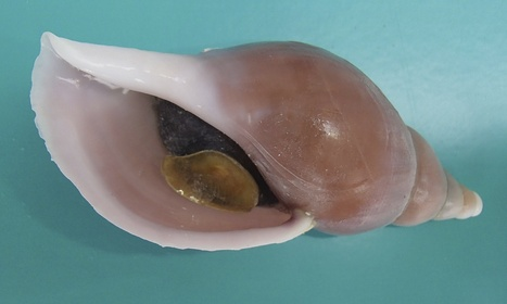 Four new species found off Scottish coast | Conservation Biology, Genetics and Ecology | Scoop.it