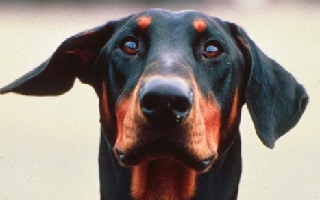 Dog dies saving its owners from killer snakes | Caring About Pets | Scoop.it
