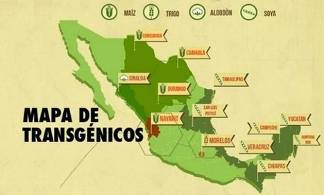 Monsanto in Mexico | Court rules against the Gene Giant in Yucatán | Questions de développement ... | Scoop.it