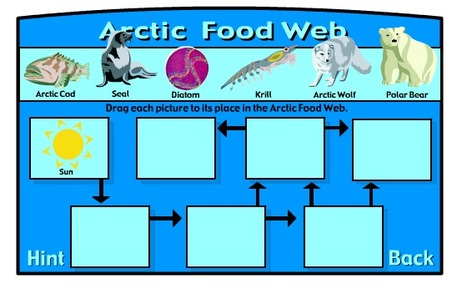 Food Webs | Food chains and food webs for 4th graders | Scoop.it