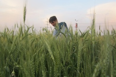 Unwanted rainfall lashes hopes for Pakistan's wheat crop - AlertNet | Sustain Our Earth | Scoop.it