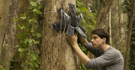 Quand de vieux téléphones aident à détecter la déforestation illégale | Nature | Scoop.it