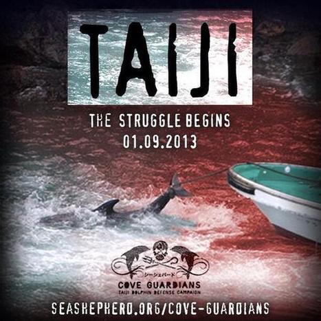 Foxewise: #tweet4taiji #ShutTaijiDown  #Taiji  video with @CaptPaulWatson | Marine life | Scoop.it