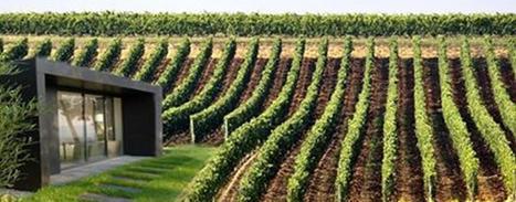 Iwine, salon de dégustation design au milieu des vignes | Le vin quotidien | Scoop.it