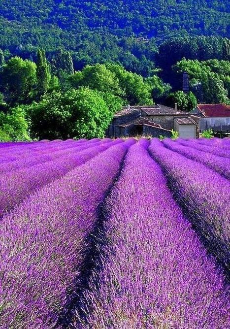 Twitter / ThatsEarth: Provence, France. ... | French Art de vivre | Scoop.it
