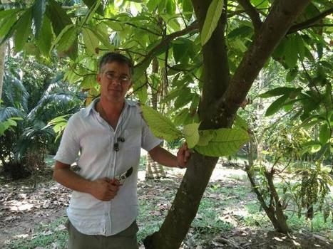 Scientists date the origin of the cacao tree to 10 million years ago | Erba Volant - Applied Plant Science | Scoop.it