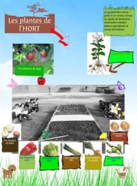 Biblioteca - Escola Sant Jordi Lleida: Un Glog de les plantes de l'hort | Cicle inicial | Scoop.it
